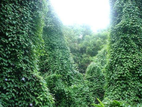 jamaica greenery